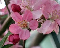 seasonal allergies, flowering trees, diet, hayfever,